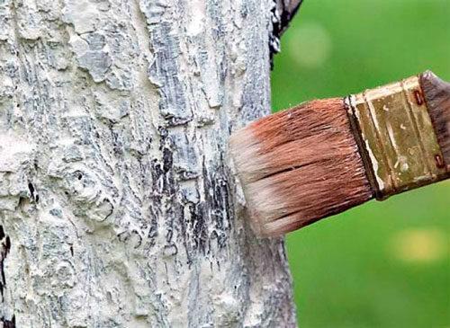 как белить деревья осеню