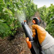обработка винограда купоросом