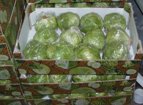 хранение цветной капусты в домашних условиях на зиму