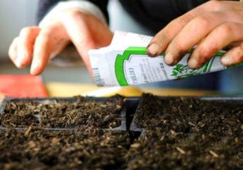 как выбирать семена для посадки