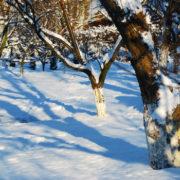 лунный посевной календарь на январь