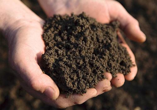 поменять слой почвы