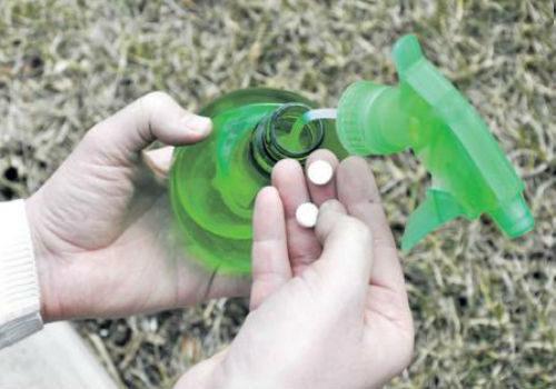 янтарная кислота для полива растений