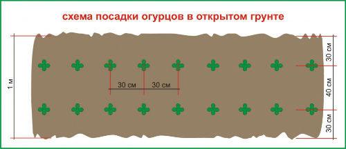 как правильно сажать семена огурцов