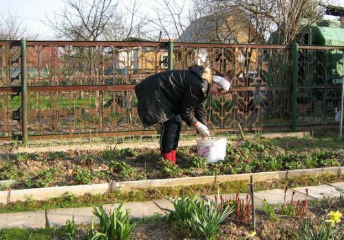 посевные работы на даче в апреле