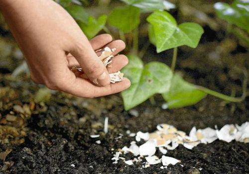 внесение скорлупы в почву