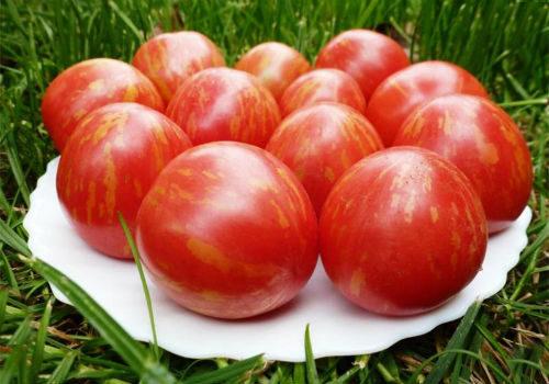лучшие сибирские сорта томатов