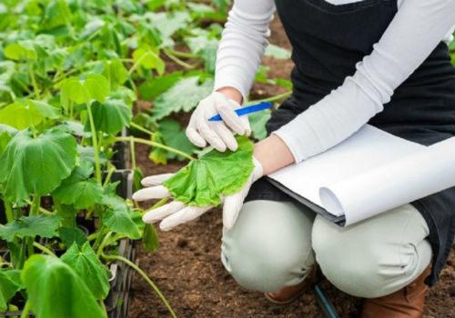 как предотвратить увядание листьев