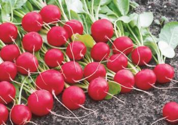 Желтые пятна на листьях помидоров: о чем говорят и как лечить растения