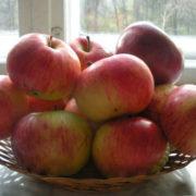 яблоня десертное петрова