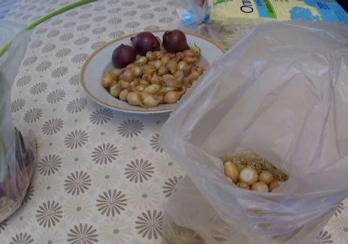 выбираем луковички для посадки