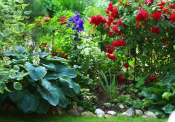 цветы растущие в тени на даче