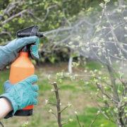 опрыскивание раствором мочевины деревьев