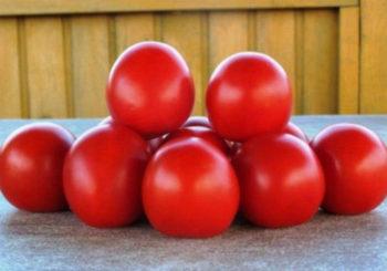томат санрайз характеристика и описание сорта