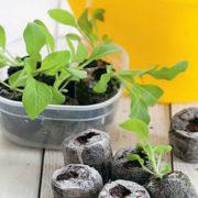 как сажать петунию в торфяные таблетки