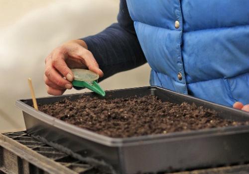 посадка лука семенами