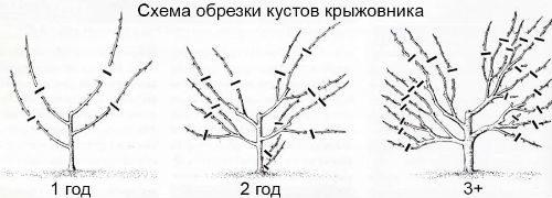 формирующая обрезка