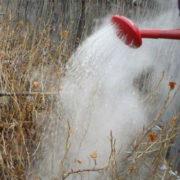 когда поливать крыжовник кипятком