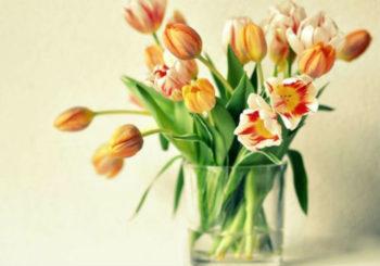 как сохранить тюльпаны в вазе подольше